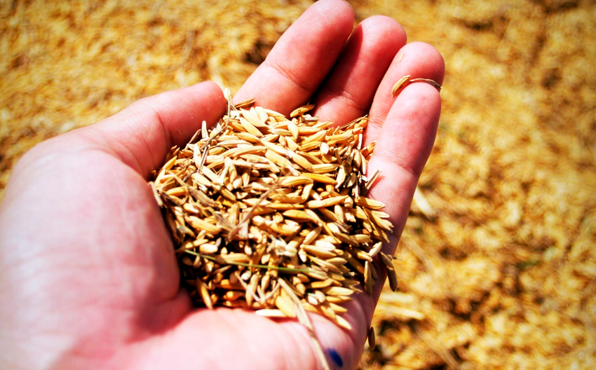 Del trigo a las papas congeladas: alertan sobre los riesgos de aislarse del Mercosur