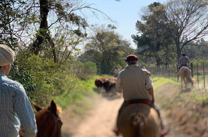 En Brasil usan trigo como alternativa alimenticia del ganado ante la disparada del maíz