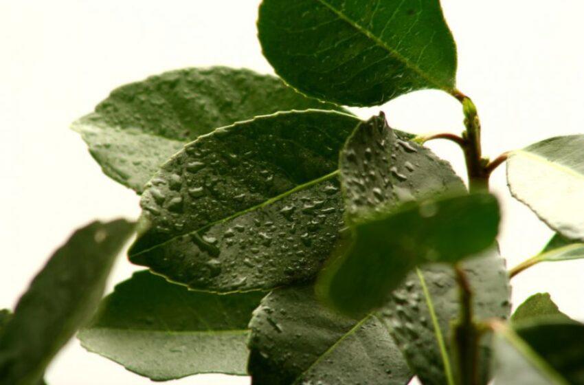Agricultura orgánica: Se impulsa la posibilidad de aplicar bio insumos en yerba mate