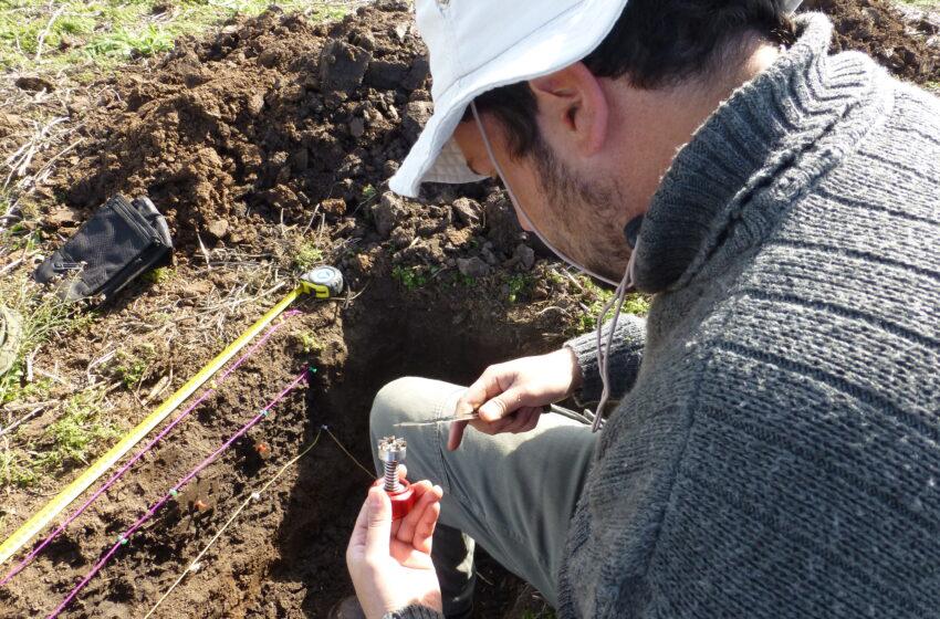 Con residuos avícolas mejoran la fertilidad y estructura del suelo
