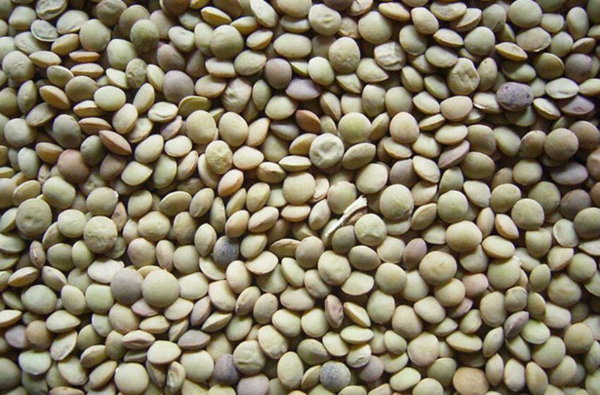 Se revirtió una norma y Argentina aseguró la exportación de productos orgánicos a Italia