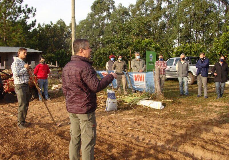 San Miguel y Caá Catí, primeros puntos para la puesta en marcha del desarrollo del Proyecto Semilleros para Pasturas