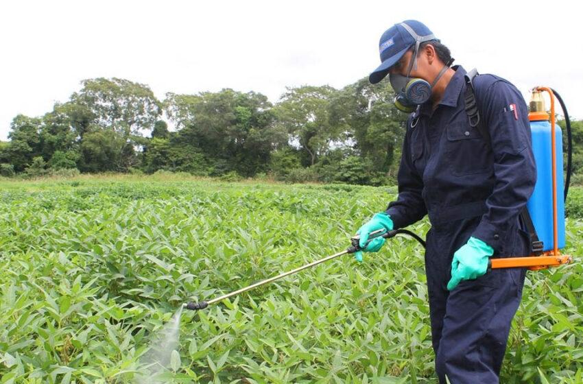 Senasa crea un sistema de trazabilidad para fitosanitarios: cómo funciona