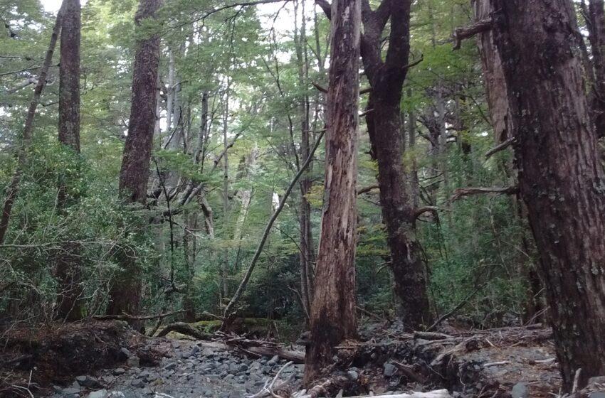 El INTA trabaja en la conservación de los bosques nativos de la Argentina